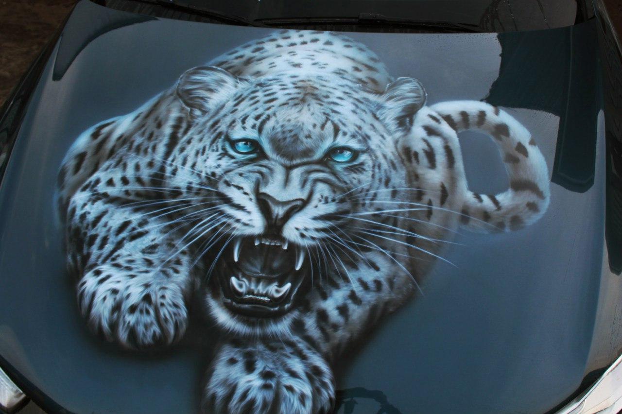 Тигр на Audi